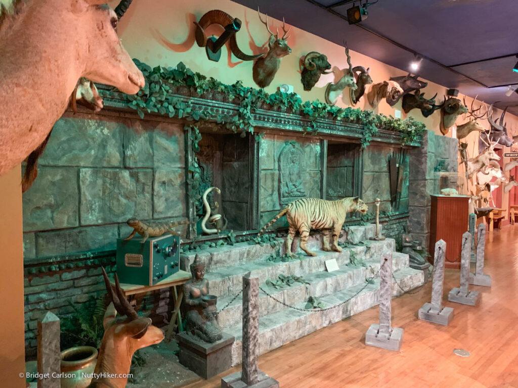 Buckhorn Saloon Animal Room Nuttyhiker