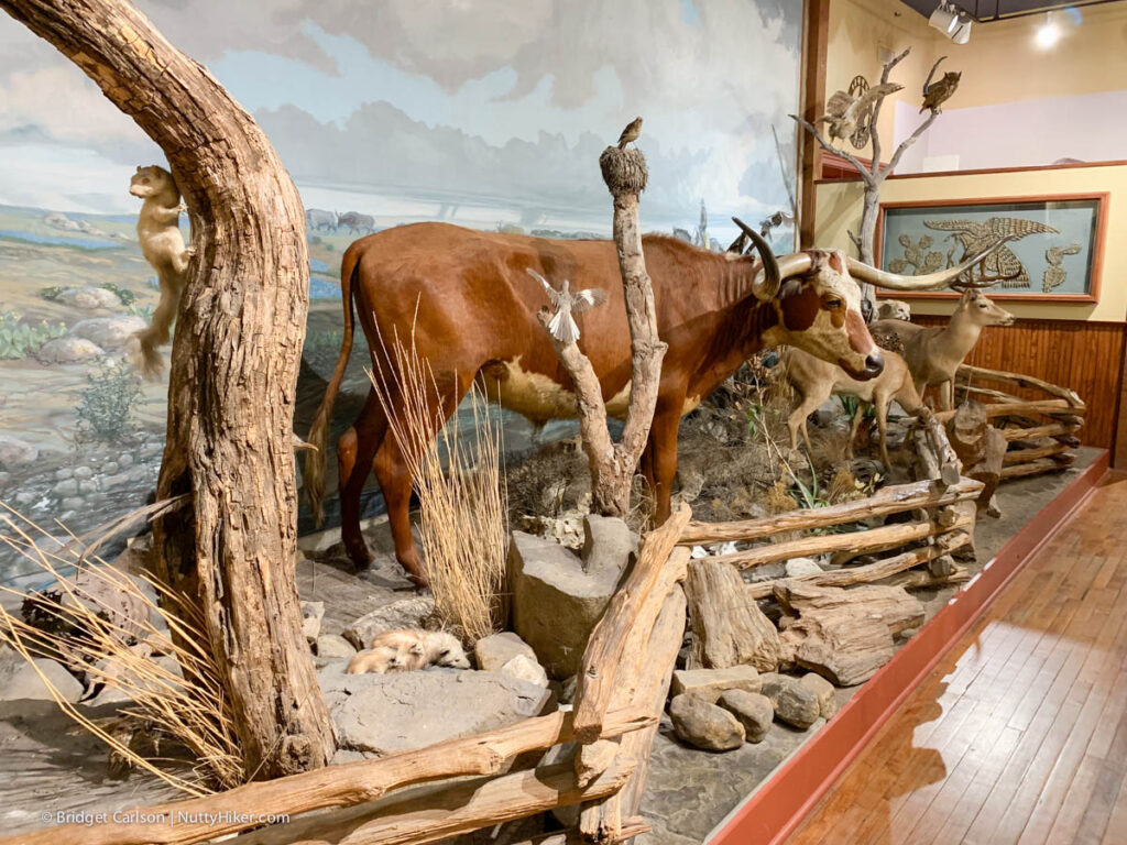 Buckhorn Saloon, Taxidermy Room
