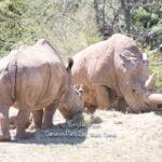 Cameron Park Zoo in Waco, Texas