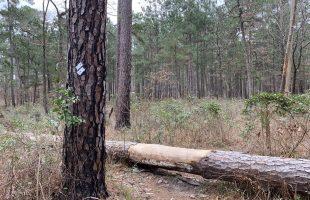 Lone Star Hiking Trail Day 1