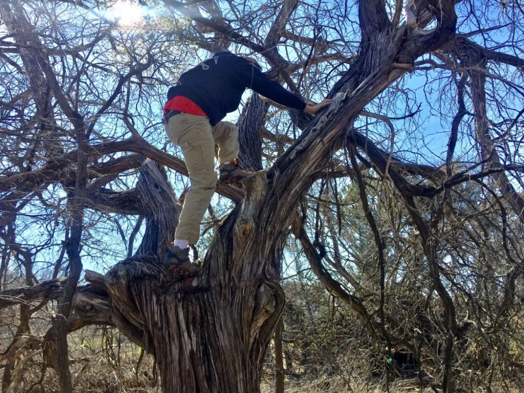 Making my husband climb a tree to get a geocache.