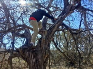 My husband climbing a tree to get a geocache.