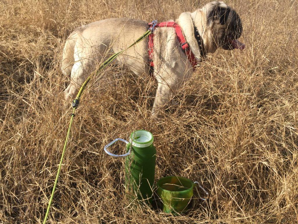 Bubi Bottle & Pet Bowl with my pug