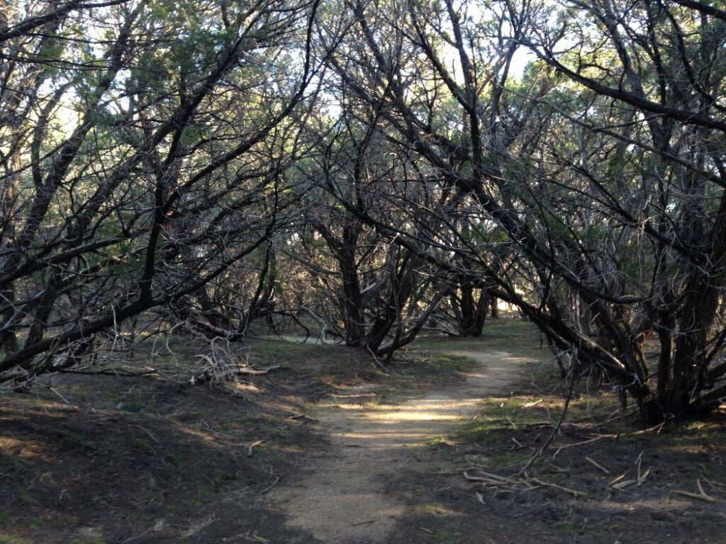 Sidewinder Trail 2016 that was left untouched at dana peak park after the fire