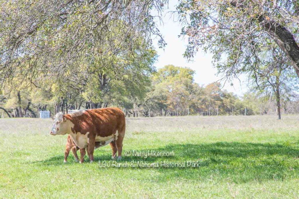 LBJ Ranch 3