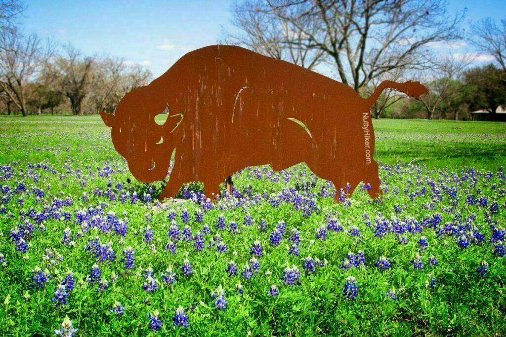Central Texas Bluebonnets at LBJ State Park & Historic Site