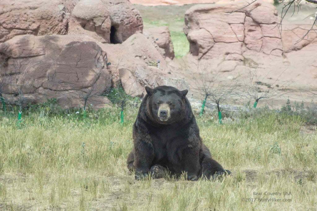 Bear Country USA in Black Hills South Dakota