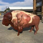 Big Buffalo in Custer South Dakota