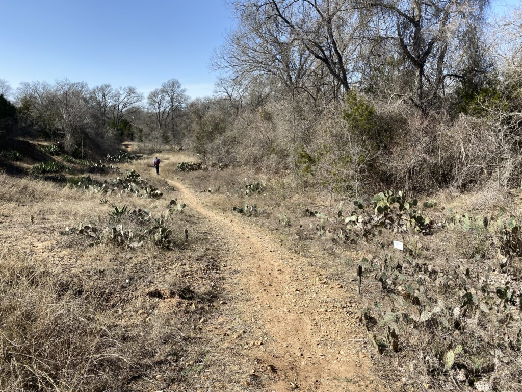 cactus garden on dragonfly trail at colorado river refuge
