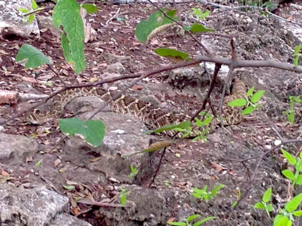 rattlesnake-dana-peak-park-texas-hiking