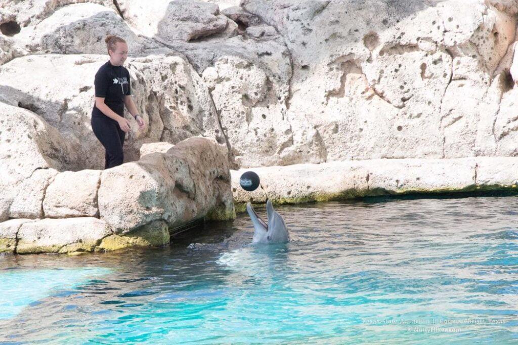 Dolphin Show at Texas State Aquarium