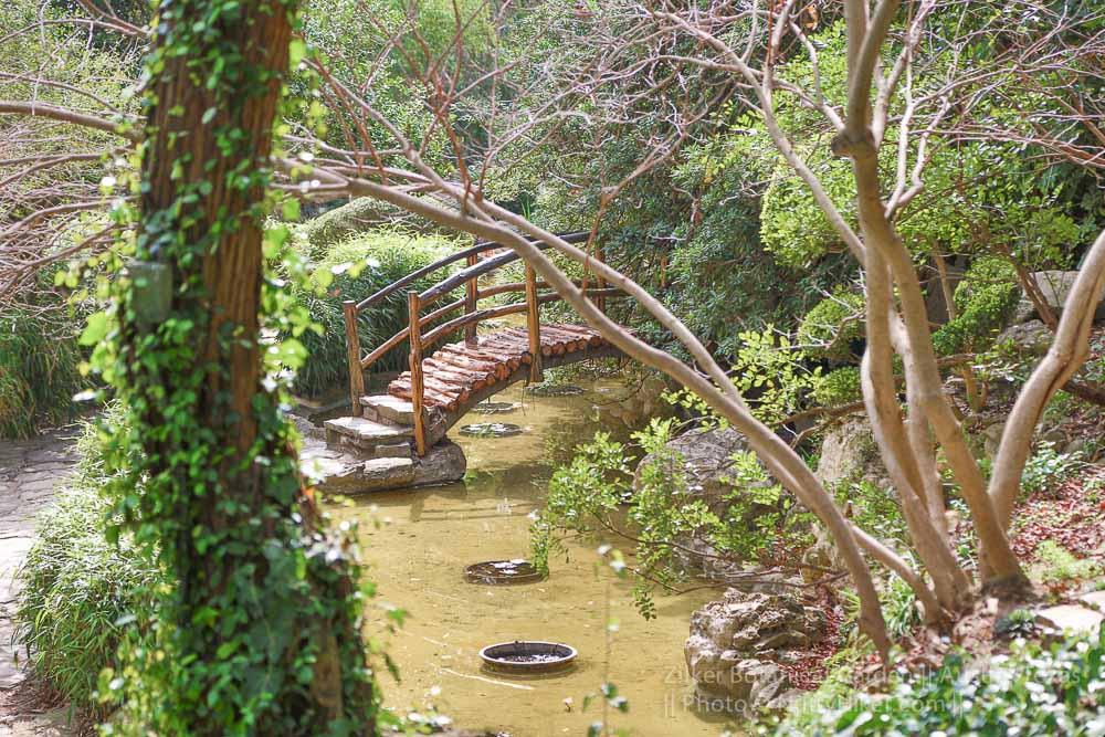 zilker botanical garden 6